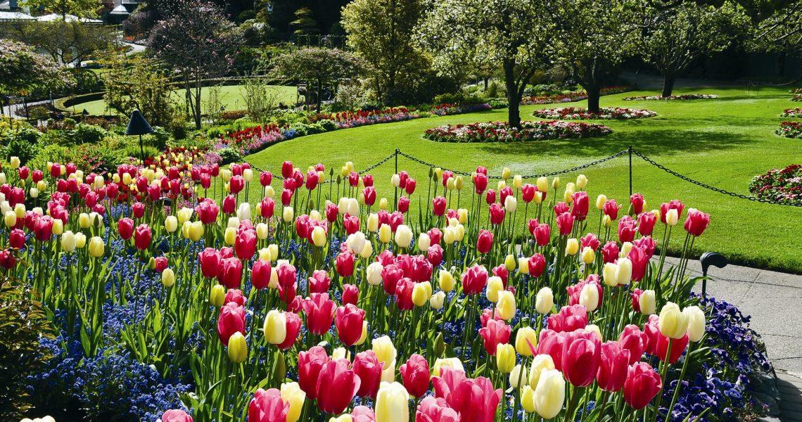 Helpful Spring Plumbing Tips