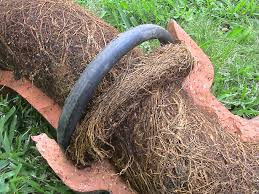 Tree Roots In Your Pipes