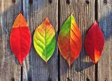 Maximize Your HVAC System This Fall