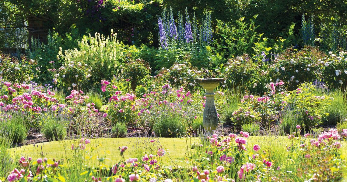 How to prepare a garden for a heatwave