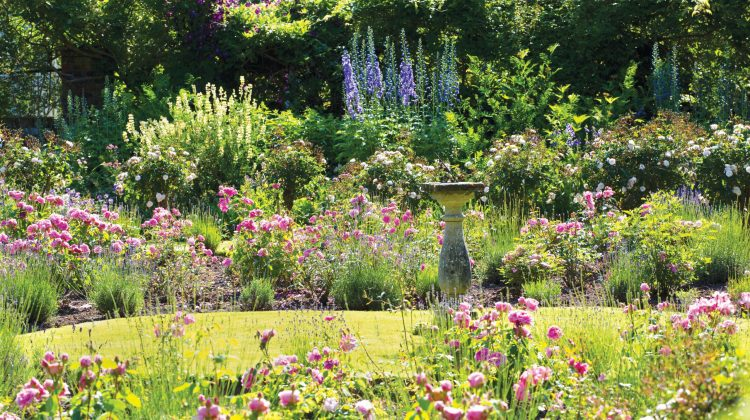 Wondering how to prepare a garden for a heatwave this summer? This summer is being touted as possibly as hot as last. And it will wreak havoc in our gardens. So, best to over-prepare than under prepare with these tips for keeping your plants healthy during extreme weather. 1. BEST TIME TO WATER PLANTS IN […]