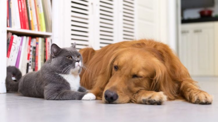 HVAC Maintenance Tips for Pet Owners Our pets are our family, they bring us joy, companionship, and love. However, with the wagging tails, playing and countless petting, pets can cause a few issues with air quality in regards to your HVAC system. Here are some HVAC maintenance tips to consider if you own pets. Changing […]