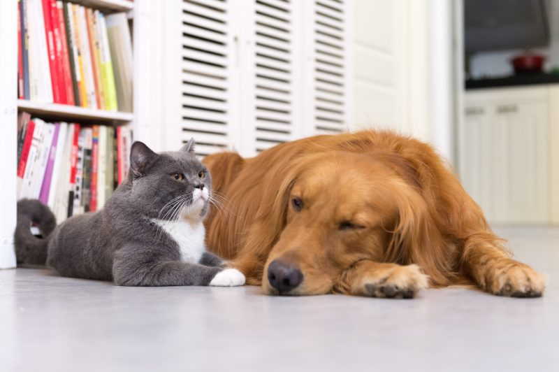 HVAC Maintenance For Homes With Pets